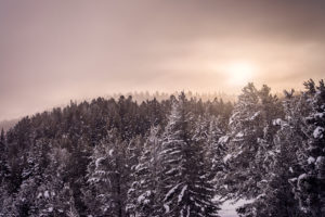 Winter, Snowy Trees, Landscape, Snow, Idaho, Landscape, Framed Art, Fine Art Prints, Home, Office, Professional Photography