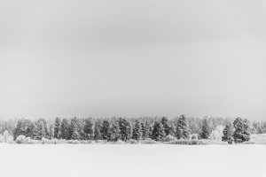 Winter Trees, Landscape, Snow, Framed Art, Fine Art Prints, Home, Office, Professional Photography
